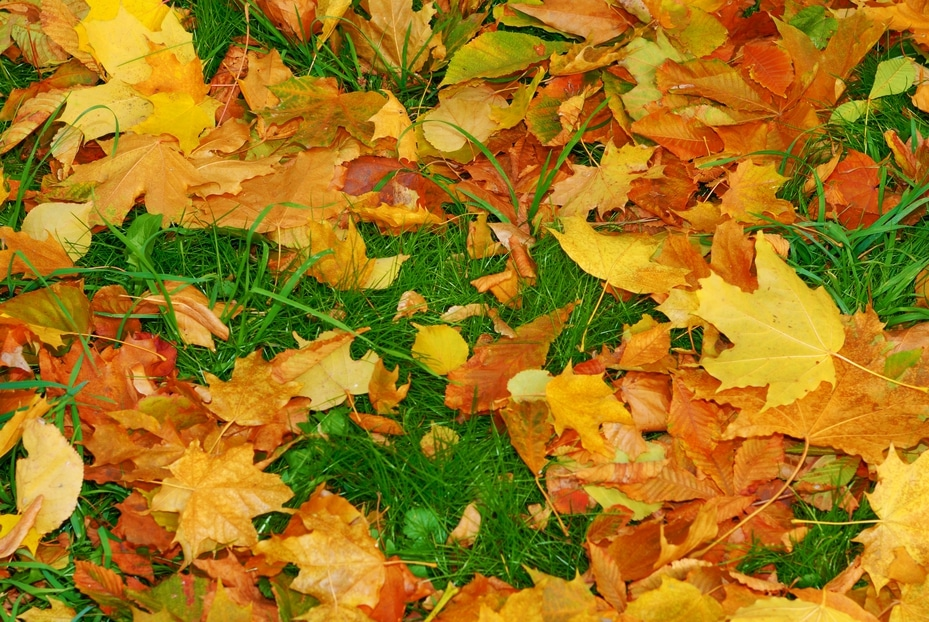 Get Rid of Your Yard Waste This Fall